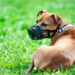 Finest Pet Muzzle For Pets Of All Dimensions