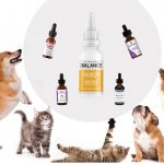 Obtain Much Better Ideal Cbd For Pets Outcomes By Adhering To 3 Easy Actions